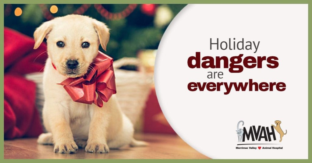 Holiday Pet Safety in Amesbury, MA